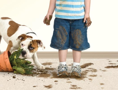 Dirty Floors? Then You Need Help With Carpet Cleaning Pensacola