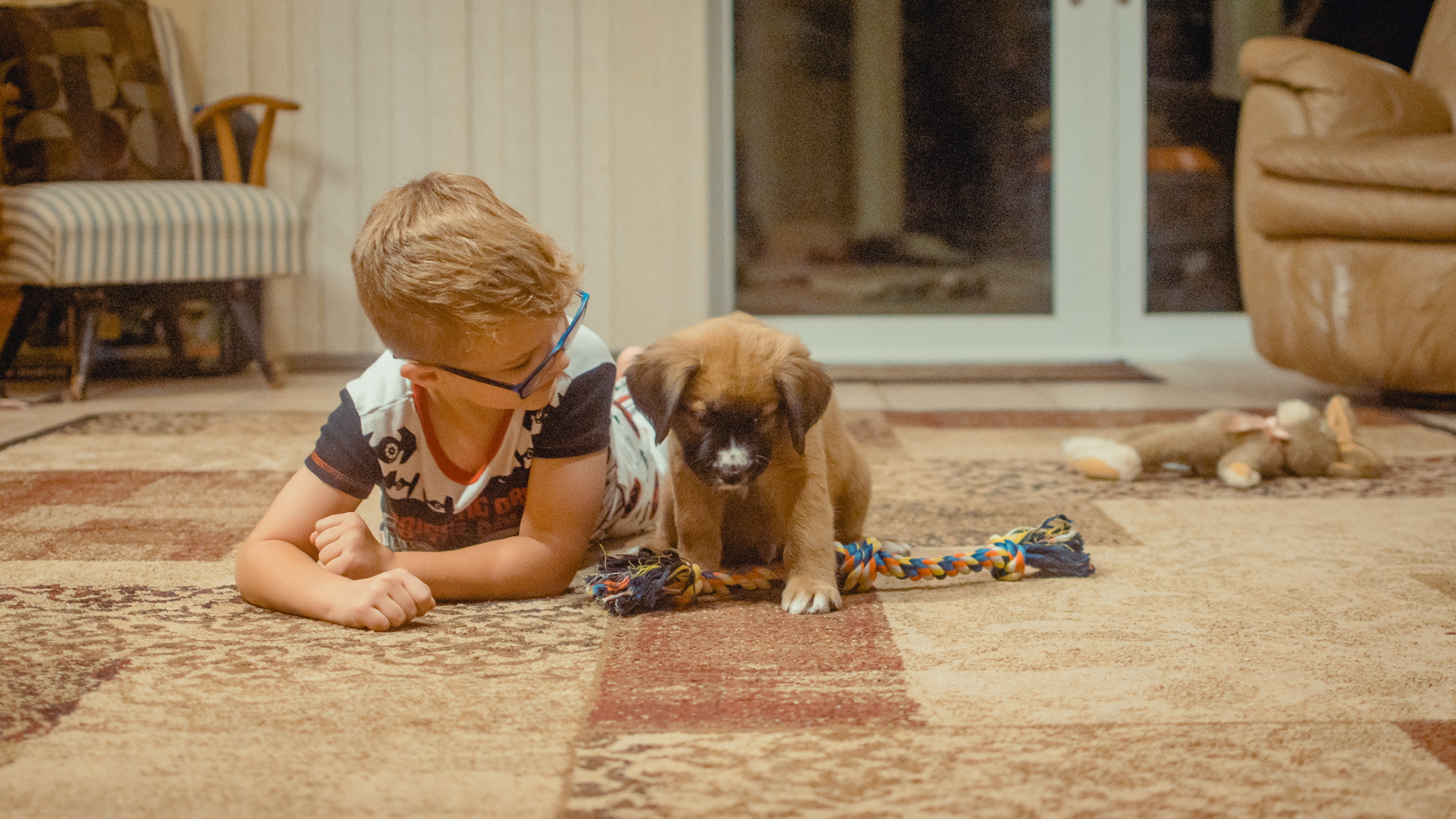 Pet stain removal in Pensacola